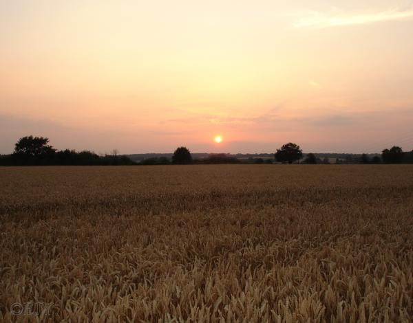 Sunset over Flaunden